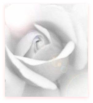 smoldering rose